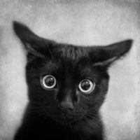 What!? by SensualPatterns. Funny cat pic. #funny #art