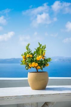 A vivid and colorful little potted lemon tree sits by itself against the bright blue sea in Oia Santorini. Beautiful Places, Beautiful Pictures, Italian Summer, Holiday Places, Fruit And Veg, Travel Aesthetic, Fruit Trees, Santorini, Container Gardening