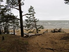 Peipsi järv / Lake Peipus Estonia by Veeseire Natural World, Utility Pole, Water, Plants, Outdoor, Facebook, Gripe Water, Outdoors, Plant