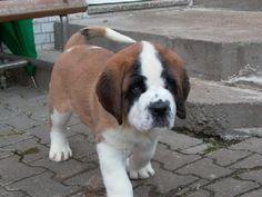 Mollie's future puppy!!! SO cute!