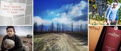 Vinos invernales: 10 imbatibles para ganarle al frío