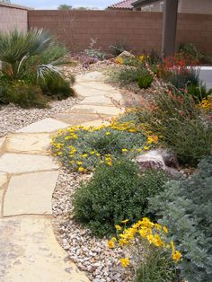 Desert Landscape - we want to landscape our yards, especially our back yard. And we want a brick or block wall.