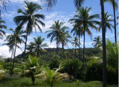Terrenos com ótimos espaços para construção de hotéis ou pousadas à venda em Itacaré, Bahia, Brasil.