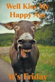 laughing animals - donkey Check out these fantastic photos of laughing animals that are so delightful they will make you giggle. And if the photos don't make you laugh, the animal-themed jokes alongside certainly will. Laughing Animals, Smiling Animals, Happy Animals, Animals And Pets, Funny Animals, Cute Animals, Wild Animals, Animal Memes, Animal Pictures
