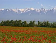 Field of beauty..