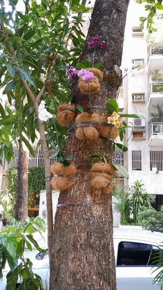 Detalhe de orquídeas em árvore em passeio público, by Gasperi Paisagismo.