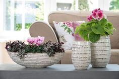 romantic combination with cyclamen & Primula Touch Me