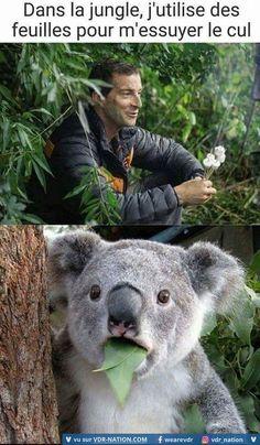 Gag and Memes: Koala bear does not approve Koala Meme, Funny Koala, Funny Bears, Funny Animals, Cute Animals, Bear Meme, Really Funny, Funny Cute, Hilarious