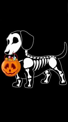 A Halloween weenie Arte Dachshund, Dachshund Love, Daschund, Piebald Dachshund, Halloween Art, Halloween Decorations, Halloween Costumes, Chihuahua, Tableau Pop Art