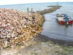 Conch Shell Pier, Freeport Bahamas.