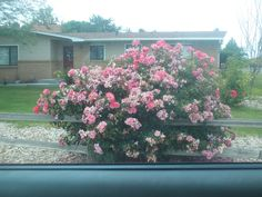 PT  454 JULY 2014 FLOWERS IN NAMPA IDAHO.