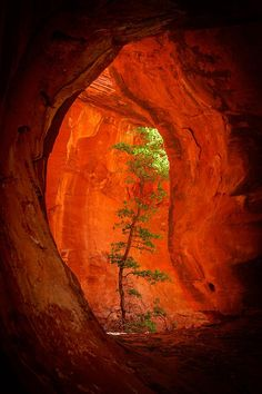 nature always finds a way. Boynton Canyon-Sedona, Arizona