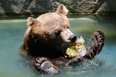 Zoos use ice treats to keep animals cool, as Brazil suffers through heatwave