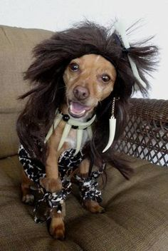 Cute Dog costumes for Halloween starring Paris!