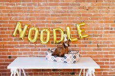 a letter to noodle // it's been 2 years since i adopted this sweet little boy! jojotastic.com @jojotastic