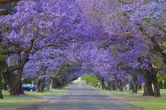 Grafton - Australia