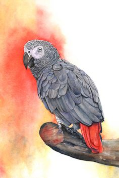 Grey Parrot print of watercolor painting smallest 5 by 7 print wall art print - bird art - art print - wildlife print Watercolor Bird, Watercolor Animals, Watercolor Paintings, Painting Art, Watercolors, Parrot Drawing, Parrot Painting, Bird Drawings, Animal Drawings