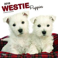 West Highland White Terrier Puppies 2018 Wall Calendar