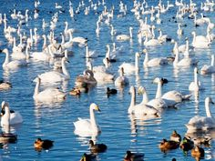 Harike Lake Wildlife Sanctuary - in Punjab, India