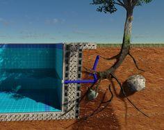 Árvores para plantio perto da piscina   Quais as árvores mais indicadas para plantar perto da piscina?  Terminei a construção da piscina e ...