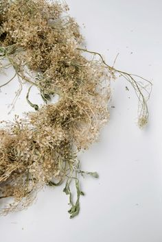 Dried Flowers, How To Dry Basil, Floral Design, Herbs, Autumn Nature, Wreaths, Country Charm, Garden, Plants