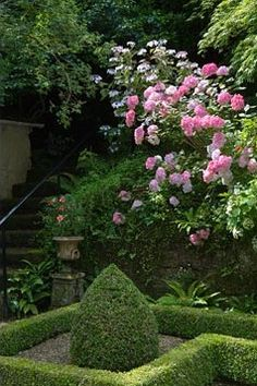 The juxtaposition of structured garden hedges with wild untamed roses is surprisingly beautiful