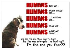 There's a very special place in hell for people who are mean to pitbulls.