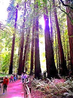 Muir Woods - Things to do in San Francisco, California http://papasteves.com/blogs/news/10405393-natures-best-sugar-blockers