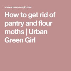 Ruins Moth And Grains On Pinterest