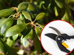 Pruning Shears, Garden Plants, Garden Tools, Flowers, Diy, Gardening, Lawn And Garden, Bricolage, Gardening Scissors