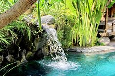 The sound of the flowing water of this swimming pool together with the plants that surrounded it maintains the serenity of this backyard.  #bali #balilandscapecompany #balilandscaper #bestinbali #garden #gardendesign #gardenideas #gardeninspiration #grass #instagarden #landscape #landscapearchitect #landscapearchitecture #landscapedesign #landscapedesigner #landscapeideas #landscaping #landscapingideas #taman #thebalibible #tropical #tropicalgarden #tropicalgardendesign #tropicallandscape…