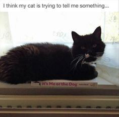 Funny Animal Pictures Of The Day 31 Pics - Funny Animal Quotes - - Funny Animal Pictures Of The Day 31 Pics The post Funny Animal Pictures Of The Day 31 Pics appeared first on Gag Dad. Animal Jokes, Funny Animal Memes, Cute Funny Animals, Funny Cute, Cat Memes, Cute Cats, Funny Humor, Funny Stuff, Animal Funnies
