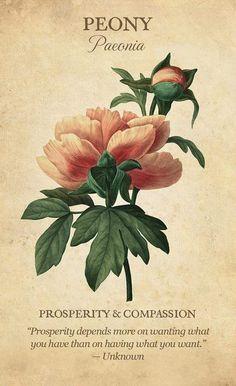 Botanical Flowers, Botanical Art, Botanical Drawings, Illustration Botanique Vintage, Vintage Botanical Illustration, Peony Illustration, Peony Meaning, Imagen Natural, Impressions Botaniques