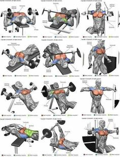 Full Body Workout Program In this article I'm going to list 3 workout plans for men to build muscle. Each workout routine is tailor. Chest Workout Women, Chest Workout Routine, Best Chest Workout, Gym Workout Tips, Weight Training Workouts, Biceps Workout, Chest Workouts, Fitness Workouts, Fun Workouts