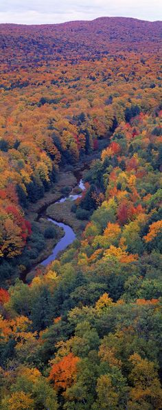 Vibrant fall foliage hugs the winding path of the Big Carp River in Michigan's Porcupine Mountains Wilderness State Park.
