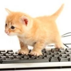 Stop typing, widdle kittykins! You are a cat! Cats cannot type coherently!