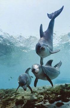 Dolphins - Google+