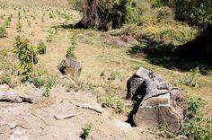 Los operativos para desmantelar huertas ilegales en el municipio de Villa Madero se intensificarán a partir de esta semana, ello como una medida para detener el marcado desequilibrio ecológico que ...