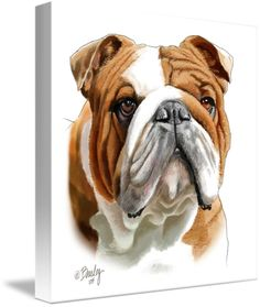 """Brown and White Bulldog"" by Tim Beasley, Athens, Georgia // This guy is one of the most handsome bulldogs I've ever seen. Not realizing how solid he is, he loves to playfully charge you driving his head into you with a force that knocked me over the first time he did it. My painting of him is done in watercolor and pastel pencils // Imagekind.com -- Buy stunning fine art prints, framed prints and canvas prints directly from independent working artists and photographers."