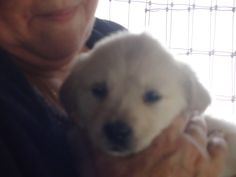 Tava @ 6 weeks. Love at first sight! @ Suzy Lilley