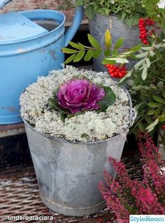 plantering,zinkhink,emalj,gran,ljung