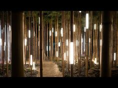 (1) Lexus Dome | Bamboo Forest - YouTube Bamboo Light, Bamboo Art, Landscape Architecture, Landscape Design, Architecture Design, Light Art Installation, Forest Light, Forest Design, Bamboo Design