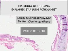 Histology of the lung explained by a lung pathologist. Part 2: bronchi - YouTube