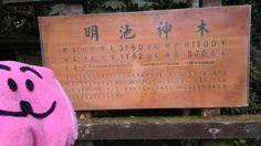 明池神木資訊