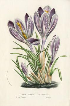great source for vintage botanical prints