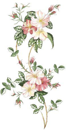 boceto rosa silvestre