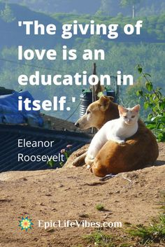 Wise, uplifting, inspirational quotes of Eleanor Roosevelt.  Beautiful thoughts from|a beautiful lady about Love | Motivation | Success | Self Worth | Positive Thinking | Beauty | Empowerment | Frienship  | Individuality | and living your Best Life!