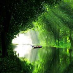 tree tunnel and water. Beautiful World, Beautiful Places, Beautiful Pictures, Landscape Photography, Nature Photography, Borneo, Nature Scenes, Amazing Nature, Belle Photo