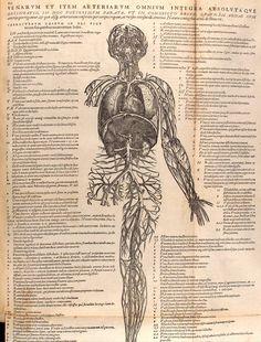 Andreas Vesalius, De Humani Corporis Fabrica,1543