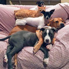Une Famille Recomposée et Formidable. Kasey Boggs et son Mari qui Vivent dans le Missouri, ont 4 Chiens, 1 Chat et 2 Canards, tous ont été Adoptés. Pour ce Couple, les Vacances sont 'Jamais sans nos Compagnons'